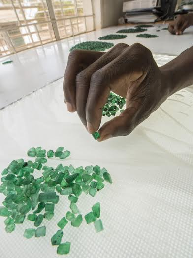 Visit in 2014 to the Gemfields Kagem Mine in Zambia. At the sorting house, a sorter examines the translucency, size, and color of an emerald crystal before adding it to an assortment.